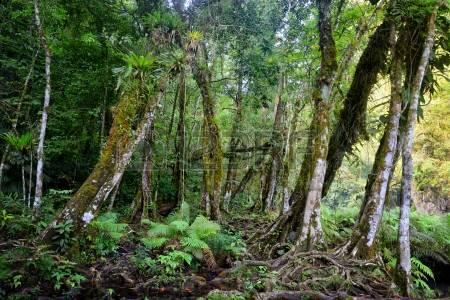 20418331-Дикие-Джунгли-майя-в-национальном-парке-semuc-champey-Гватемала